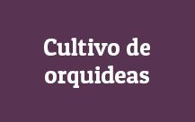 Cultivo-de-orquideas