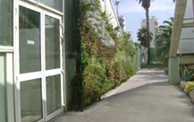 Jardineria-vertical---foto