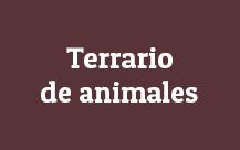 Terrario-animales